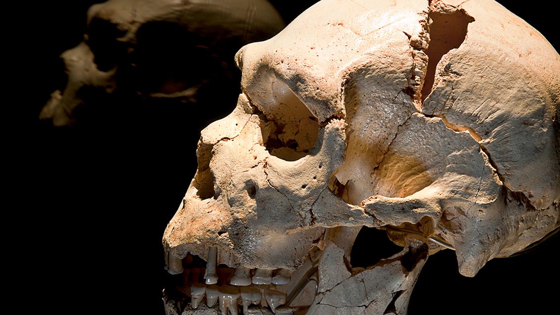 Museo de la Evolución Humana, <br> Burgos